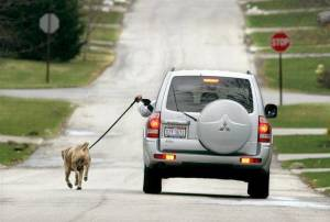 walking_dog_car