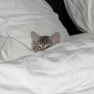 kitten_in_a_bed