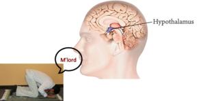lord hypothalamus