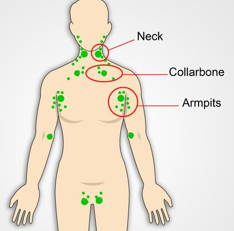 Location of the lymph nodes in the human body.